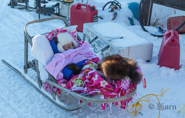 A family in Kaltag uses a home-made birch sled to pull their daughter in.