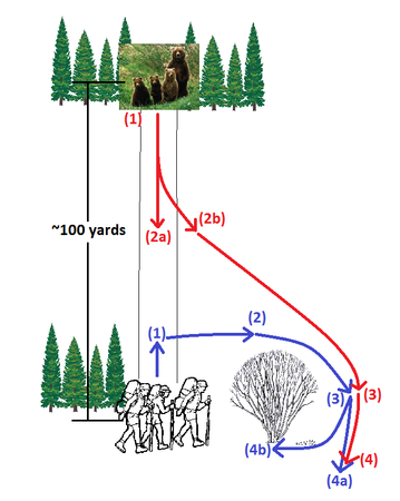 Diagram showing how the bear moved in relation to our group