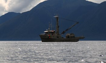 As we neared Alaska, crossing the Douglas Channel, we started seeing commercial fishing vessels.