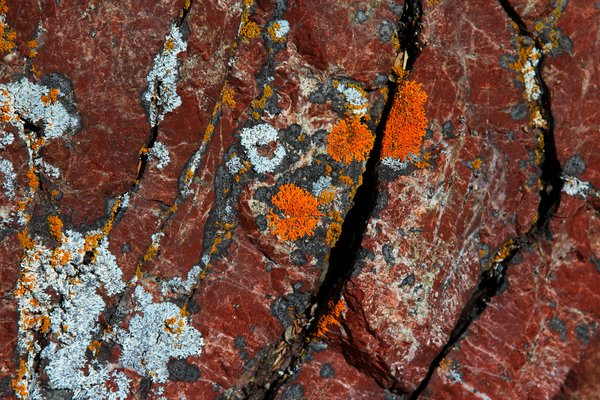 A rainbow of lichens growing on a red chert cliff