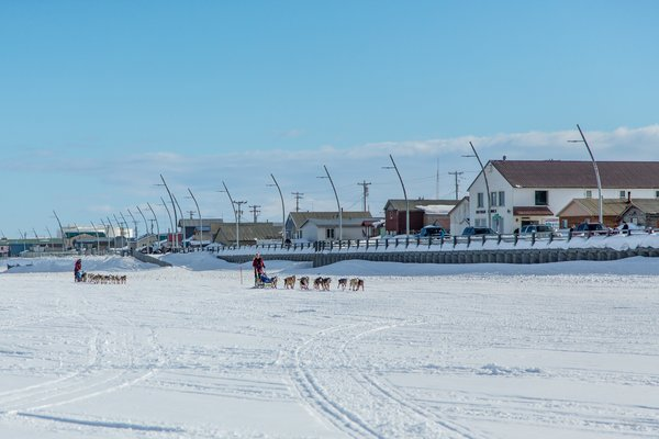 Mushers making their way to the starting line of the Kobuk 440.