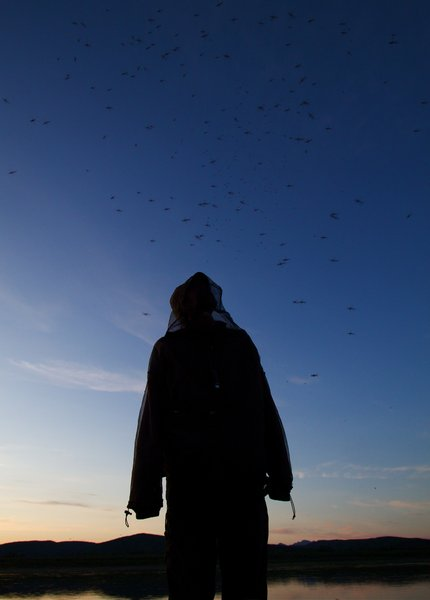 Mosquitoes by the hundreds along the Kuskokwim River.