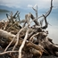 Driftwood and the Lake