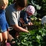 Gardening with the kids