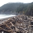 Gore Point driftwood