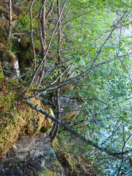 Loose moss over boulder cliffs was a common obstacle. Often grabbing overhanging vegetation was a useful means of conveyance.