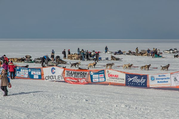 The Kobuk 440 sled dog race is the last race of the season in Alaska due to its far north location.