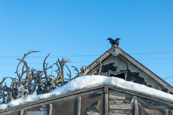 Two ravens perch atop an abandoned cabin on Kotzebue's Front Street.