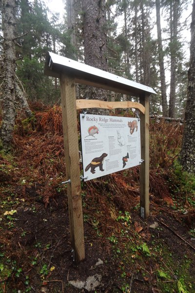 High on a narrow hiking trail near Seldovia Alaska, this sign provides information on some of the lesser known inhabitants of the region.