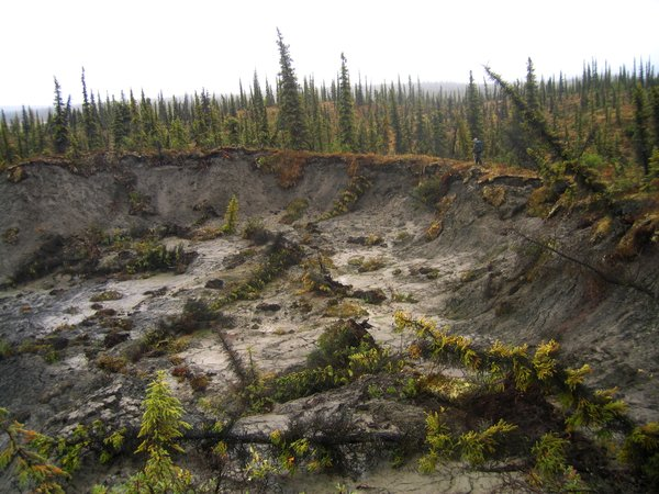 Like a crater from a bomb, this hole of melting permafrost interrupted the smooth forest around it.