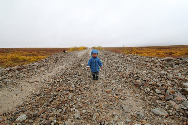 Katmai liked the way the quarry road was easier to walk on than tundra.