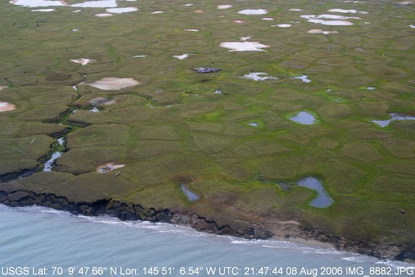 This aerial view of tundra on the north slope shows large patches of Alaska's State Flower sprouting from the tundra.