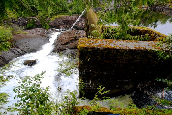 A long-abandoned dam blocks salmon passage to Cougar, Bear, and Deer Lakes on Princess Royal Island.