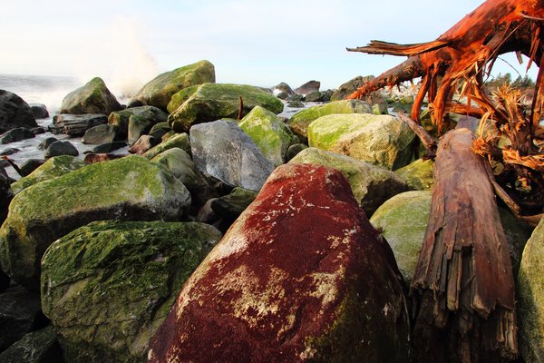 "A storm at Sitkagi Lagoon tossed this red-algae-covered boulder far above its normal place in the intertidal zone.  Boulders are less sensitive to <a href=""http://www.groundtruthtrekking.org/Essays/Global-warming-coastal-erosion-malaspina-glacier.html"">erosion</a> than sand or gravel, but even the boulder beaches are changing quickly."