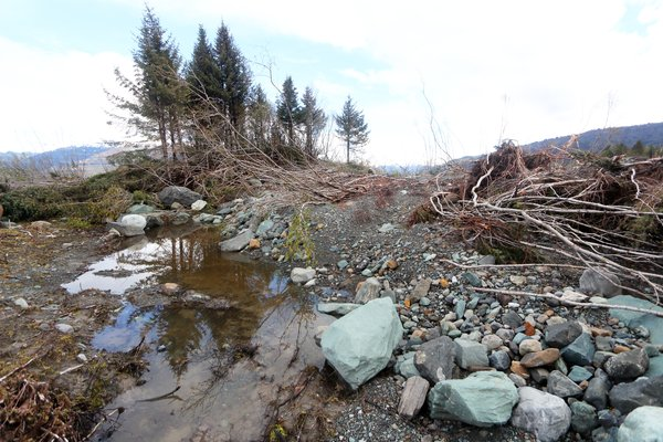 Trees toppled and boulders moved by a tsunami as it flowed out of Taan Fjord into Icy Bay.