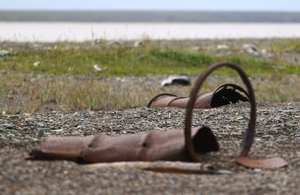 Some tragedy struck a patch of Alaska's State Flower, leaving tattered remains along miles of this arctic beach.