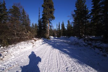 Ice road paralleling Iditarod trail and Skwentna river.